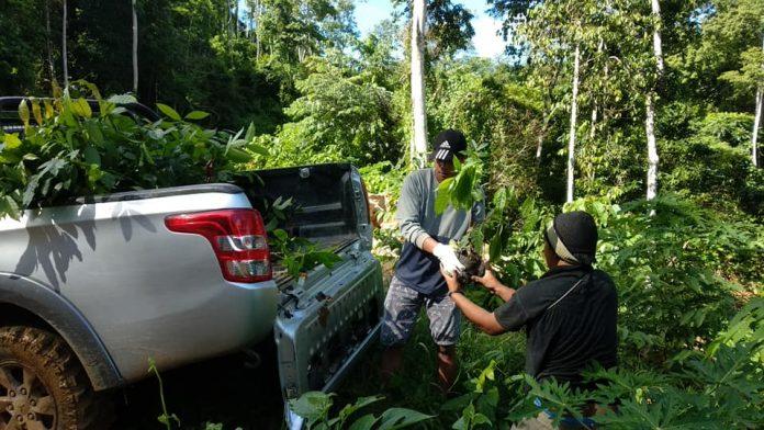 porgasi sulut masyarakat lingkar tambang tanam bibit pohon mahoni